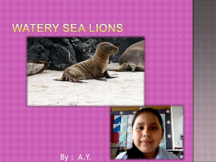 Watery Sea Lions<br />                       By :  A.Y.<br />