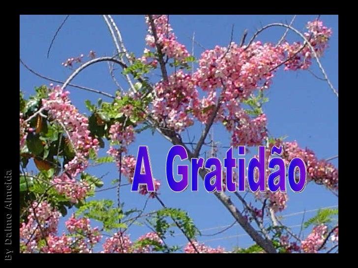 A Gratidão By Dalmo Almeida