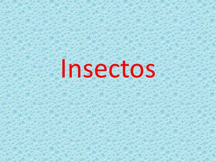 Insectos<br />