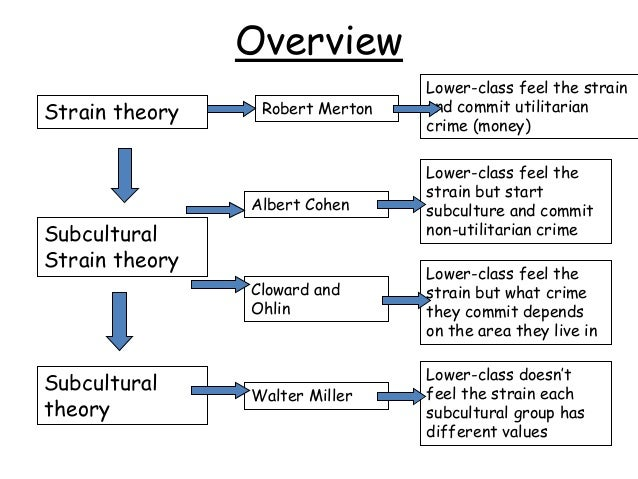 overview of sociologists essay