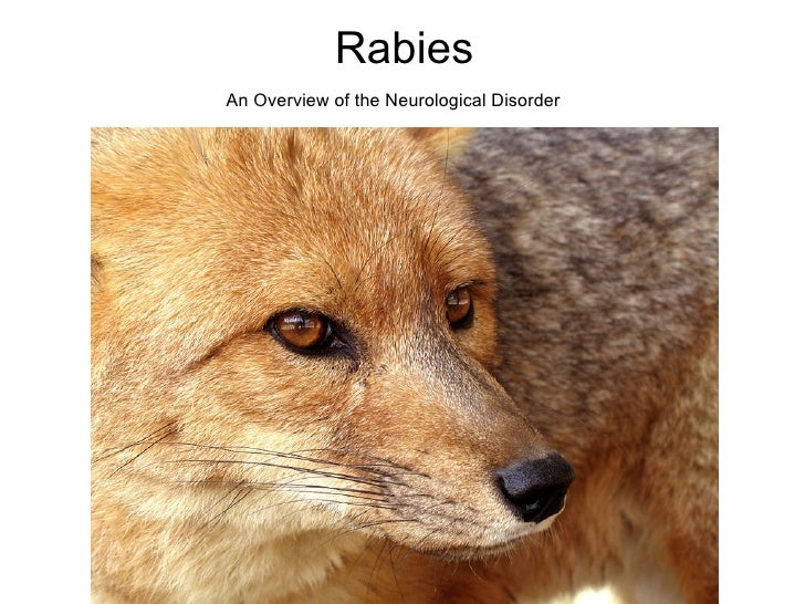 Rabies An Overview of the Neurological Disorder