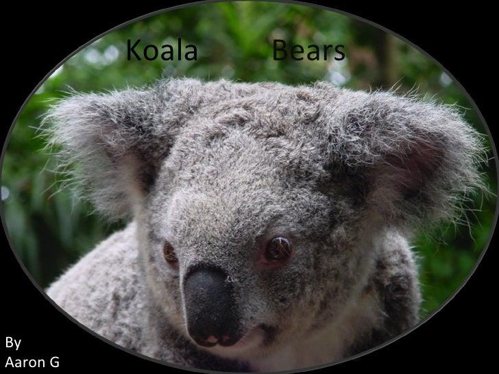 Koala Bears By Aaron G