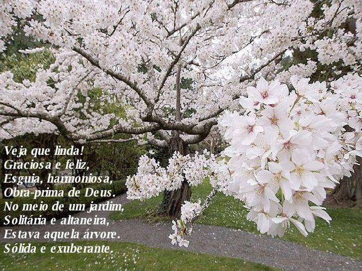 Veja que linda! Graciosa e feliz, Esguia, harmoniosa, Obra-prima de Deus. No meio de um jardim, Solitária e altaneira, Est...