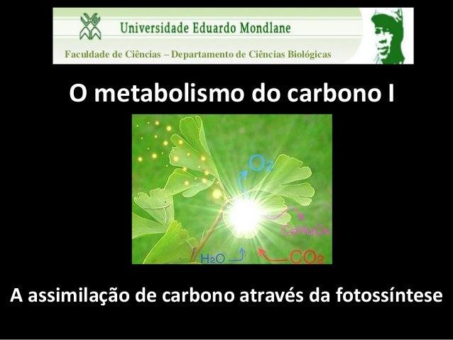 Faculdade de Ciências – Departamento de Ciências Biológicas      O metabolismo do carbono IA assimilação de carbono atravé...