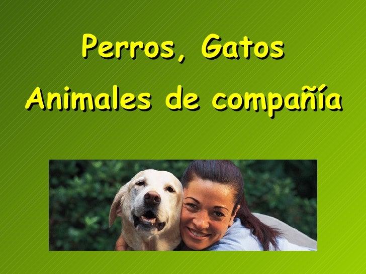 Perros, Gatos Animales de   compañía