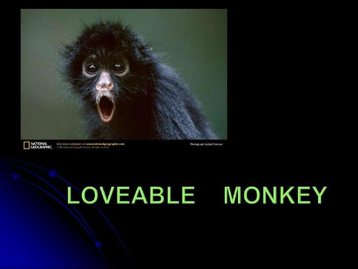 Loveable    Monkey<br />