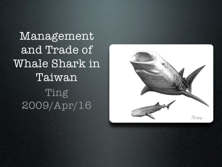 Management  and Trade of Whale Shark in    Taiwan     Ting  2009/Apr/16