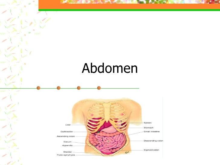 Abdomen & Breasts