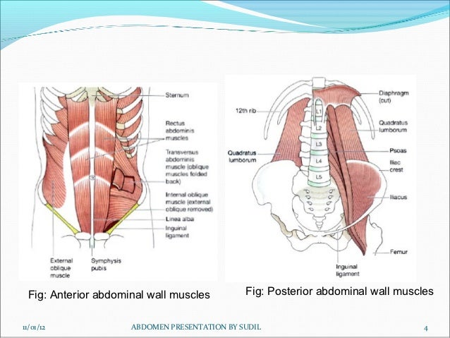 Muscles and pre vertrebral vessels taherasonographyclass ccuart Images