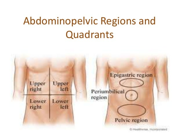 5 additionally Human Internal Body Parts Humans Internal Body Parts Name Anatomy Body Charts furthermore Abdomen 4 as well 2053041 in addition Diagram Of The Body With Organs Diagram Of Body With Organs Clipart Clipartfest. on what are the organs in abdominopelvic cavity