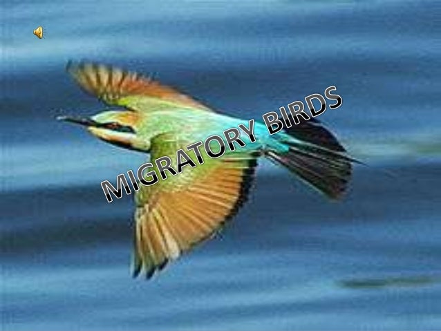  The legislative definition of Migratory Birds are species that in the course of their annual Migratory birds are some of...