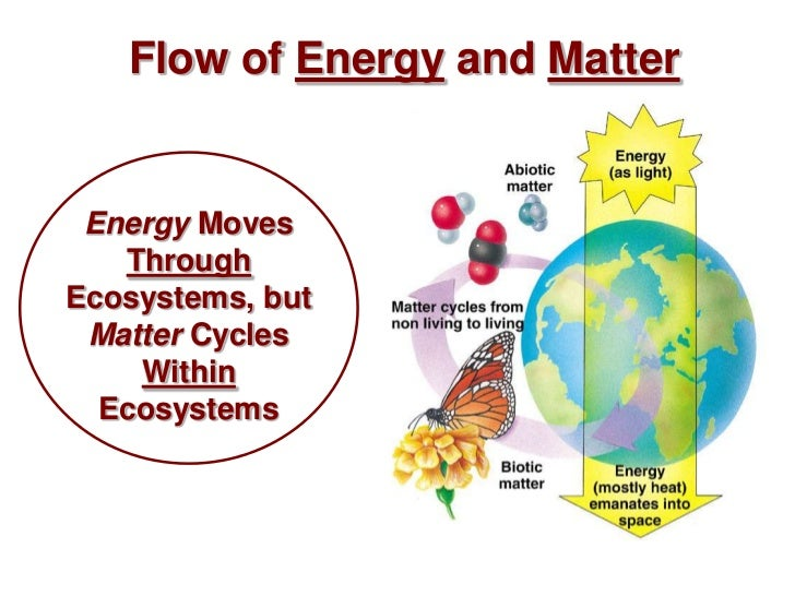 a summary of the cycle of chemicals through the ecosystem Energy flow through an ecosystem n  producer transforms light energy or other energy sources into chemical  summary of the event.