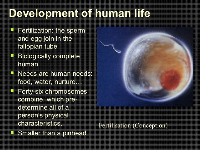 180 million sperm egg fertilization human