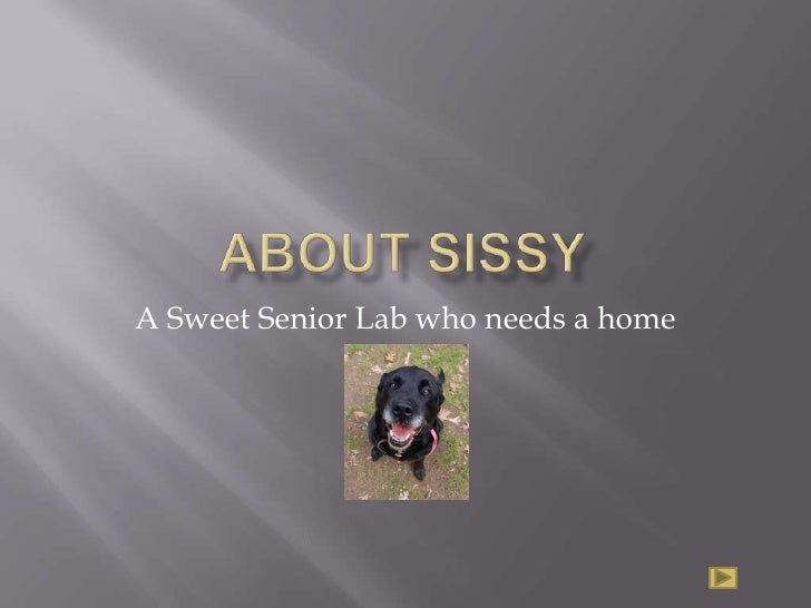 About Sissy<br />A Sweet Senior Lab who needs a home<br />