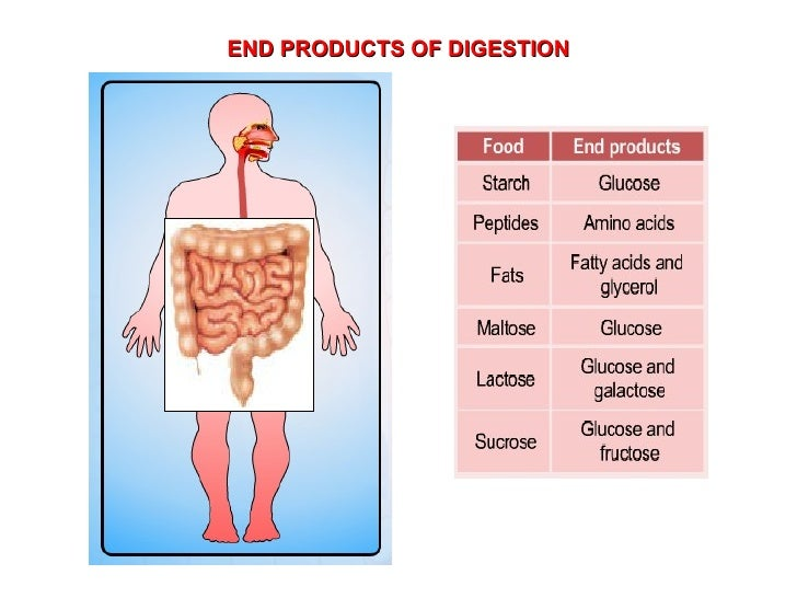 END PRODUCTS OF DIGESTION