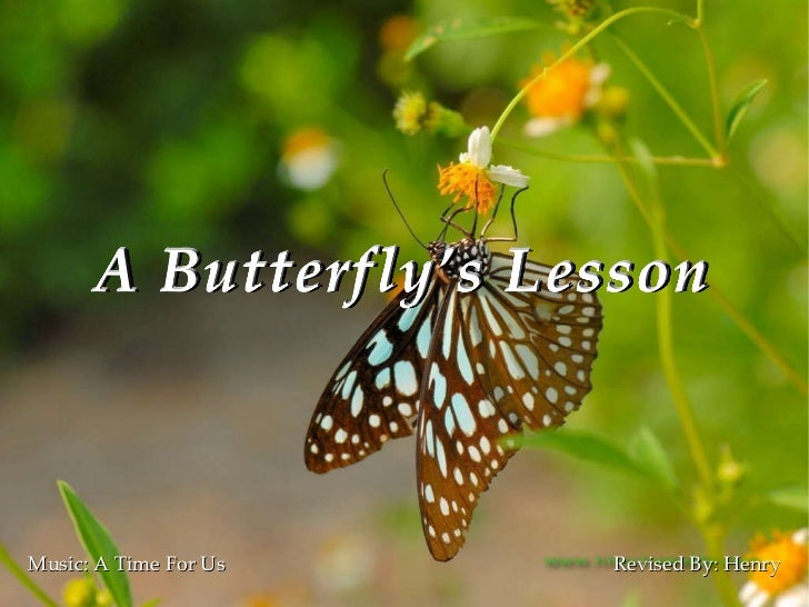 A butterfly's lesson(rev)