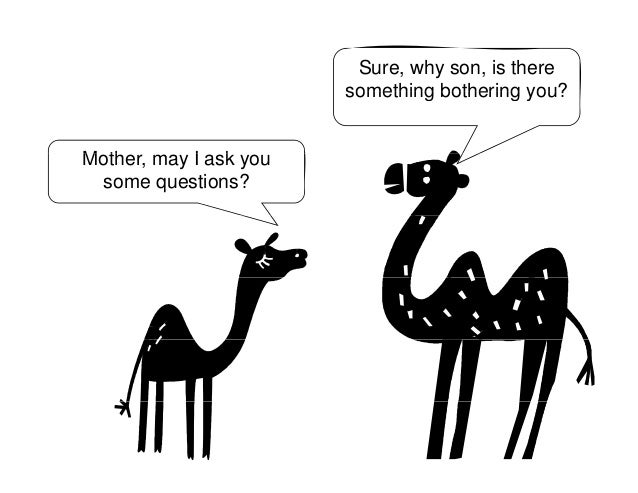A camel story is only complete when- where you are now