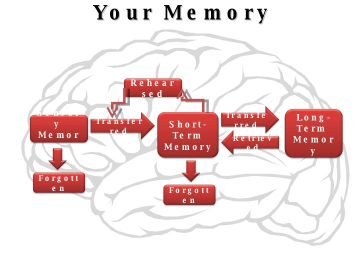 alzeimers and memory essay