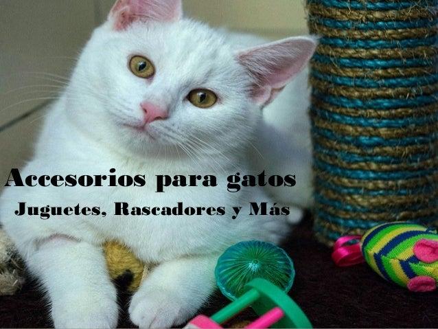 Accesorios para gatos Juguetes, Rascadores y Más