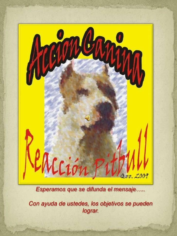Accion canina reaccion pitbull pbf