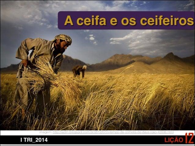 LIÇÃOI TRI_2014 12 A ceifa e os ceifeiros imagem: http://iadrn.blogspot.com.br/2012/07/o-tempo-da-colheita-de-deus-joao-43...