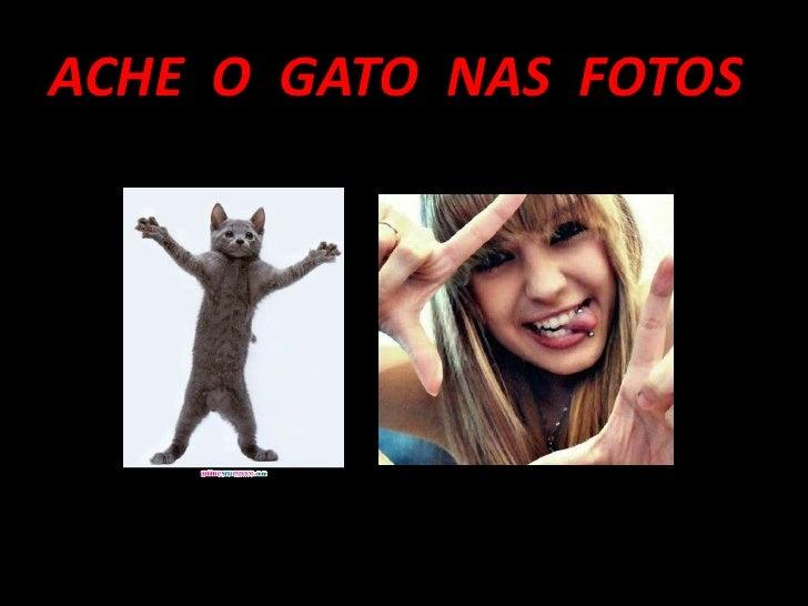 ACHE O GATO NAS FOTOS