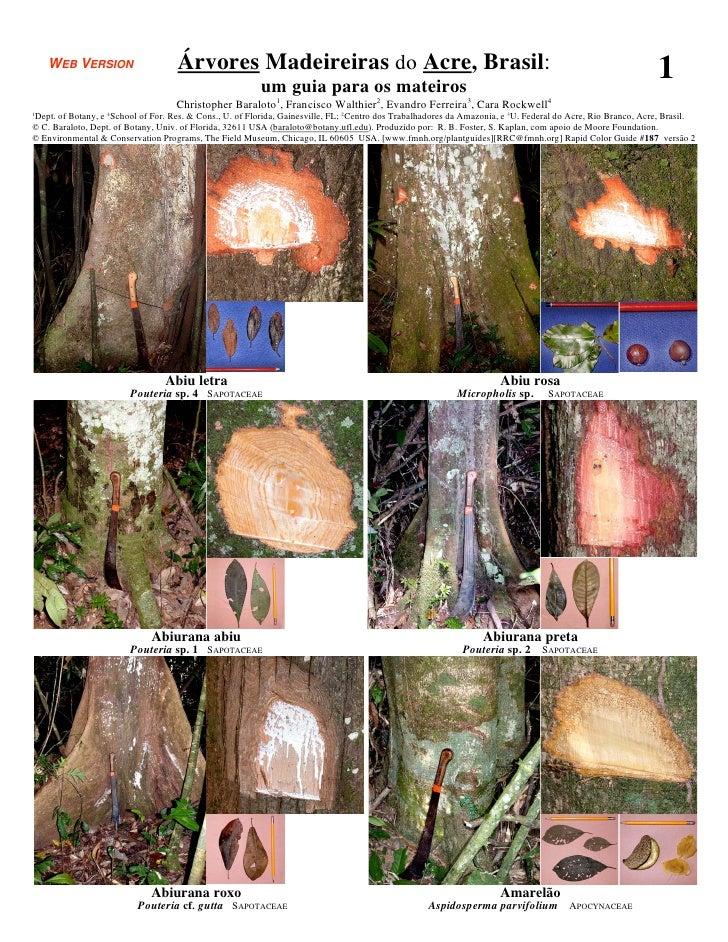 WEB VERSION                     Árvores Madeireiras do Acre, Brasil:                                                      ...