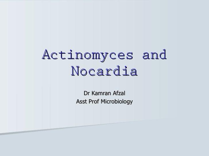 Actinomyces + nocardia