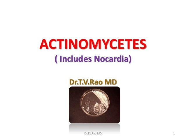 ACTINOMYCETES( Includes Nocardia)Dr.T.V.Rao MDDr.T.V.Rao MD 1