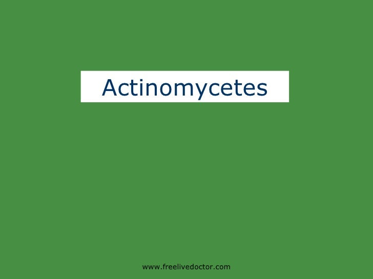 Actinomycetes www.freelivedoctor.com