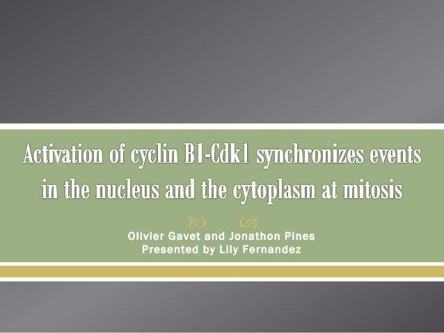 Activation of cyclin b1 cdk1 synchronizes events