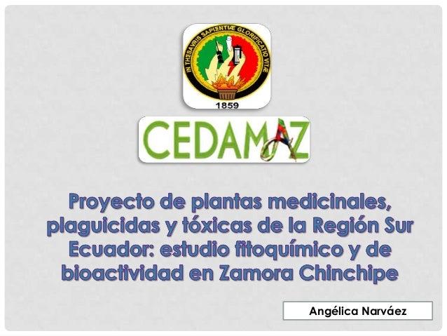 Angélica Narváez
