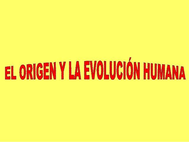 """EL ORIGEN DEL SER HUMANO    Hasta el siglo XIX     A mediados del siglo XIX El ser humano había          Darwin publica """"E..."""