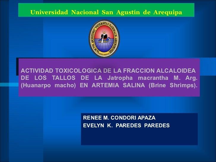 Universidad Nacional San Agustín de ArequipaACTIVIDAD TOXICOLOGICA DE LA FRACCION ALCALOIDEADE LOS TALLOS DE LA Jatropha m...