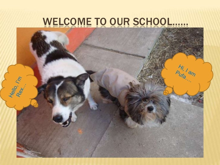 WELCOME TO OUR SCHOOL……<br />Hi, I am Pufa….<br />Hello, I'm  Rex…<br />