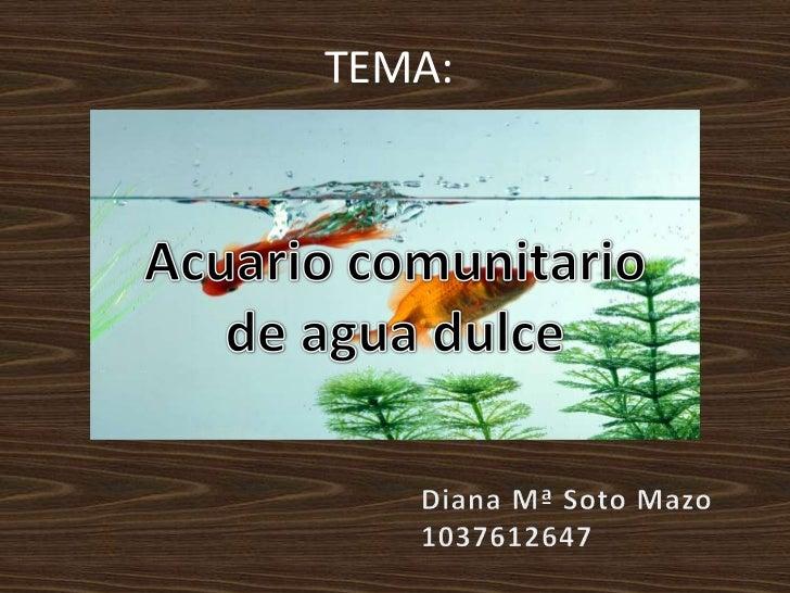 TEMA:<br />Acuario comunitario<br />de agua dulce<br />Diana Mª Soto Mazo<br />1037612647<br />