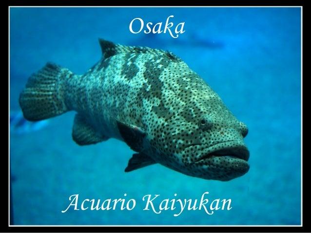 Acuario Kaiyukan Osaka