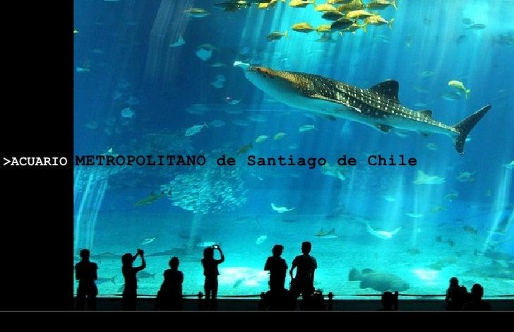 Acuario metropolitano de santiago for Construccion de piscinas santiago chile