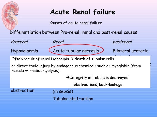 renal failure essays
