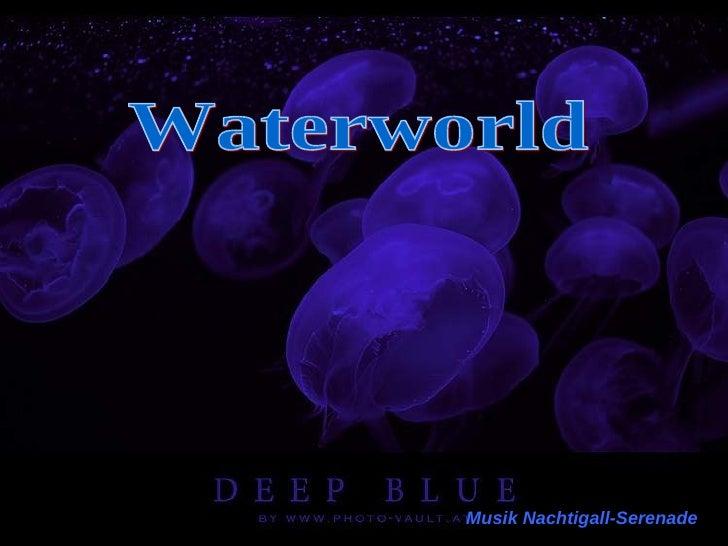 Waterworld Musik Nachtigall-Serenade