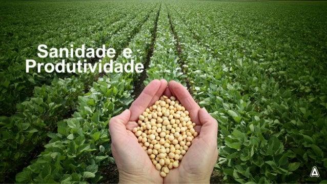 O cenário de doenças em soja está mudando. ..  DFC  -'- - › Antracnose ¡V-q_ 'A , i i N  -i       Ferrugem Oidio Mancha Al...