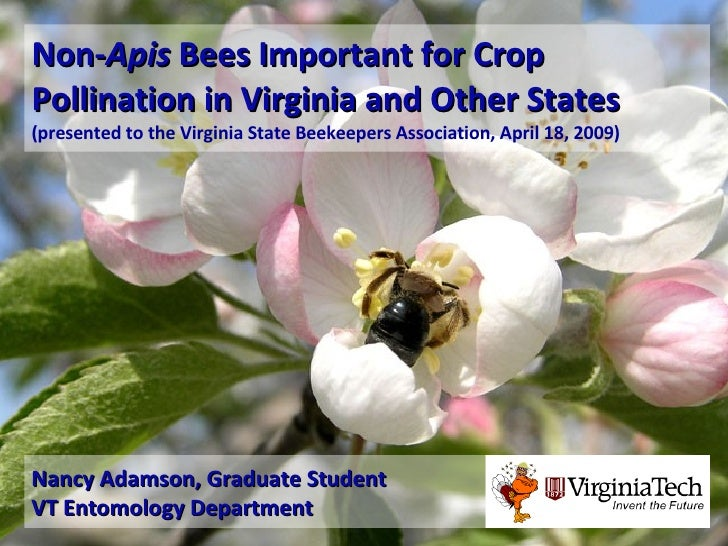 Non- Apis  Bees Important for Crop Pollination in Virginia and Other States   (presented to the Virginia State Beekeepers ...