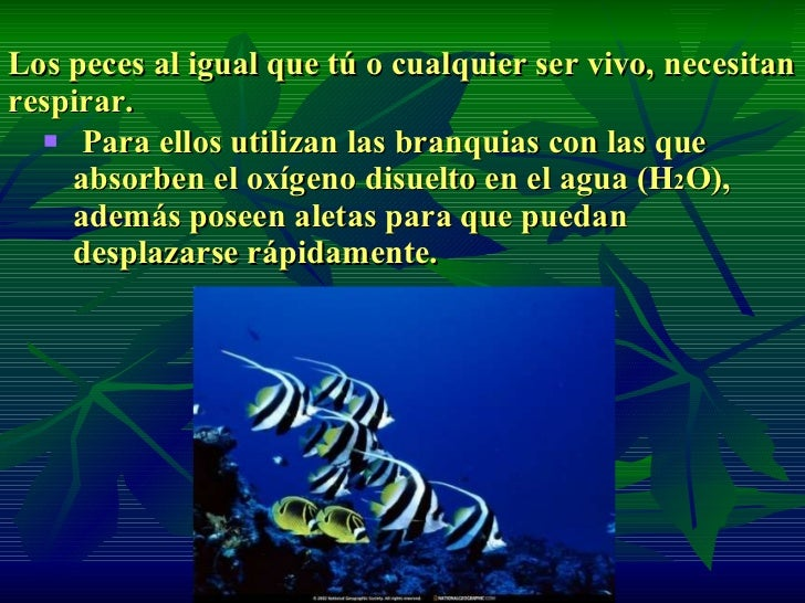 Adaptaci n de seres vivos for Peces que no necesitan oxigeno
