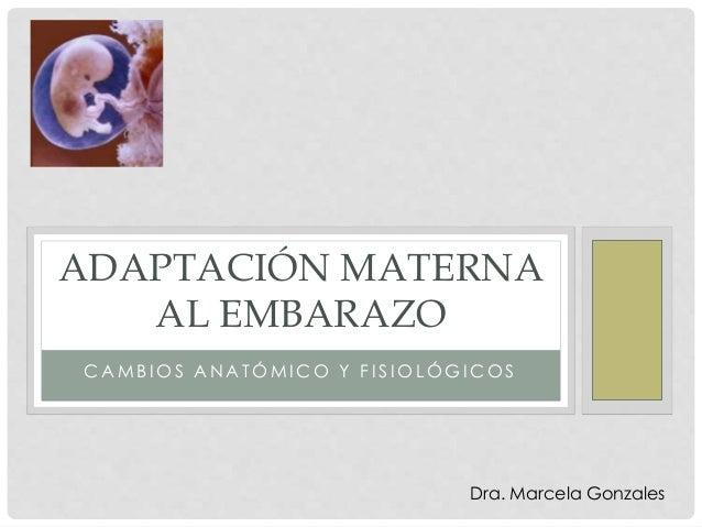 C A M B I O S A N A T Ó M I C O Y F I S I O L Ó G I C O S ADAPTACIÓN MATERNA AL EMBARAZO Dra. Marcela Gonzales