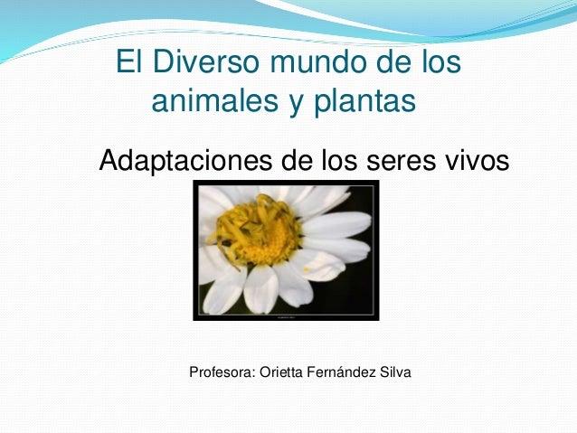 El Diverso mundo de los animales y plantas Adaptaciones de los seres vivos Profesora: Orietta Fernández Silva