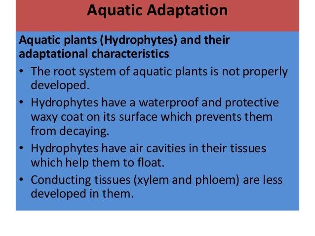 adaptive features of animals in aquatic