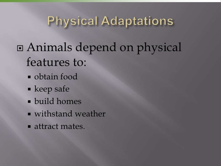    Animals depend on physical    features to:       obtain food       keep safe       build homes       withstand wea...