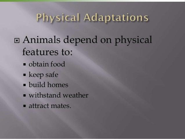 Adaptation and selective breeding