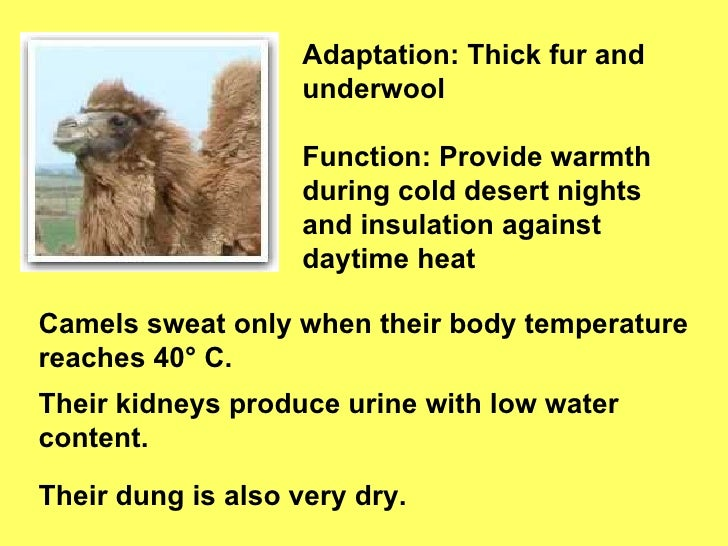 camels adaptations to extreme environments The hot climate of a desert is a testing environment for living camels have a thin layer of fur underneath animal adaptations to hot climates last.
