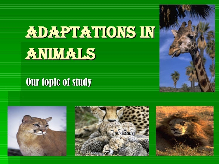 Adaptations in animals   Our topic of study